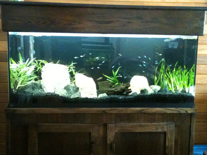 55 gallon community aquarium and stand